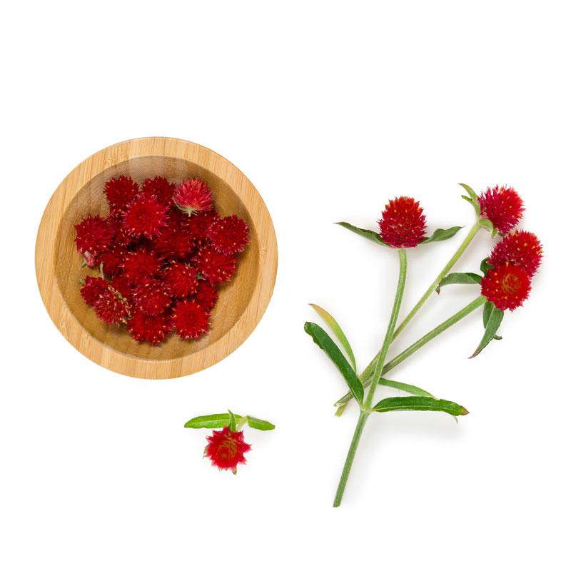 Strawberry-Fields-Globe-Amaranth Soalheiro the pur terroir
